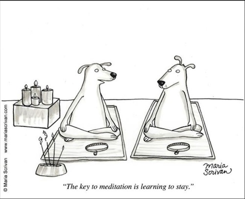 dogs meditating the key to meditation is learning to stay